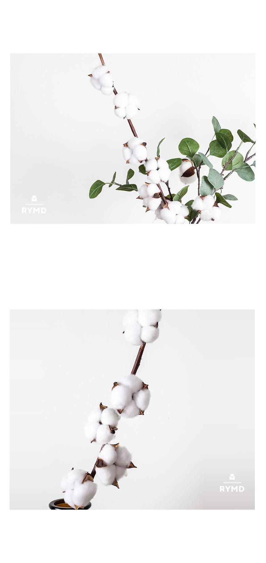 Cotton(8).jpg