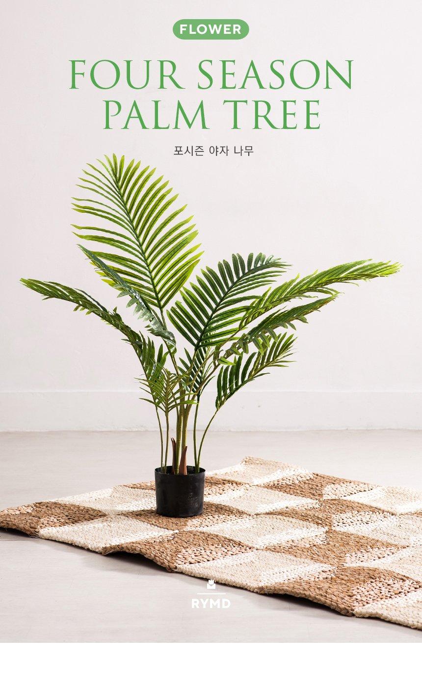 FOUR-SEASON-PALM-TREE_01.jpg