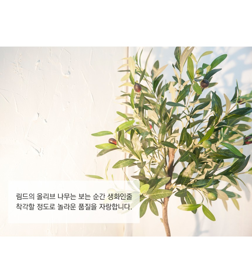 MODERN-OLIVE-TREE_08.jpg