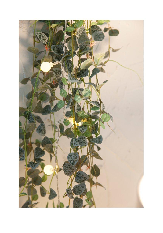 BABY-HANGING-PLANT_07.jpg