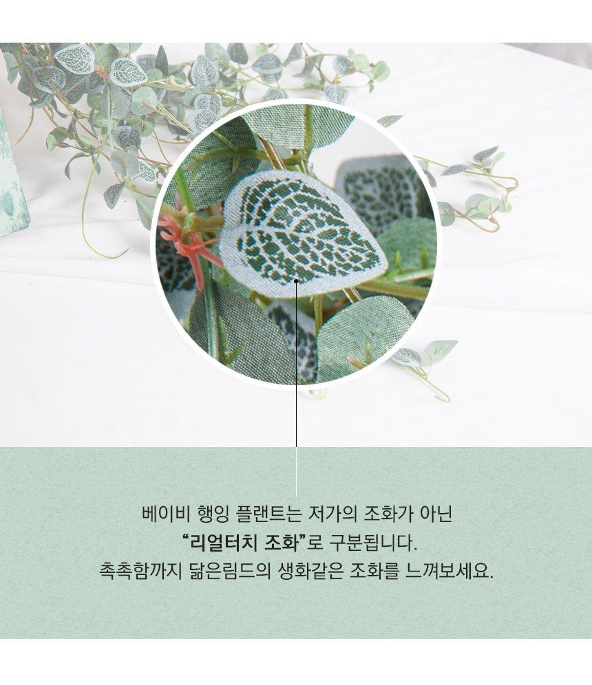 BABY-HANGING-PLANT_09.jpg