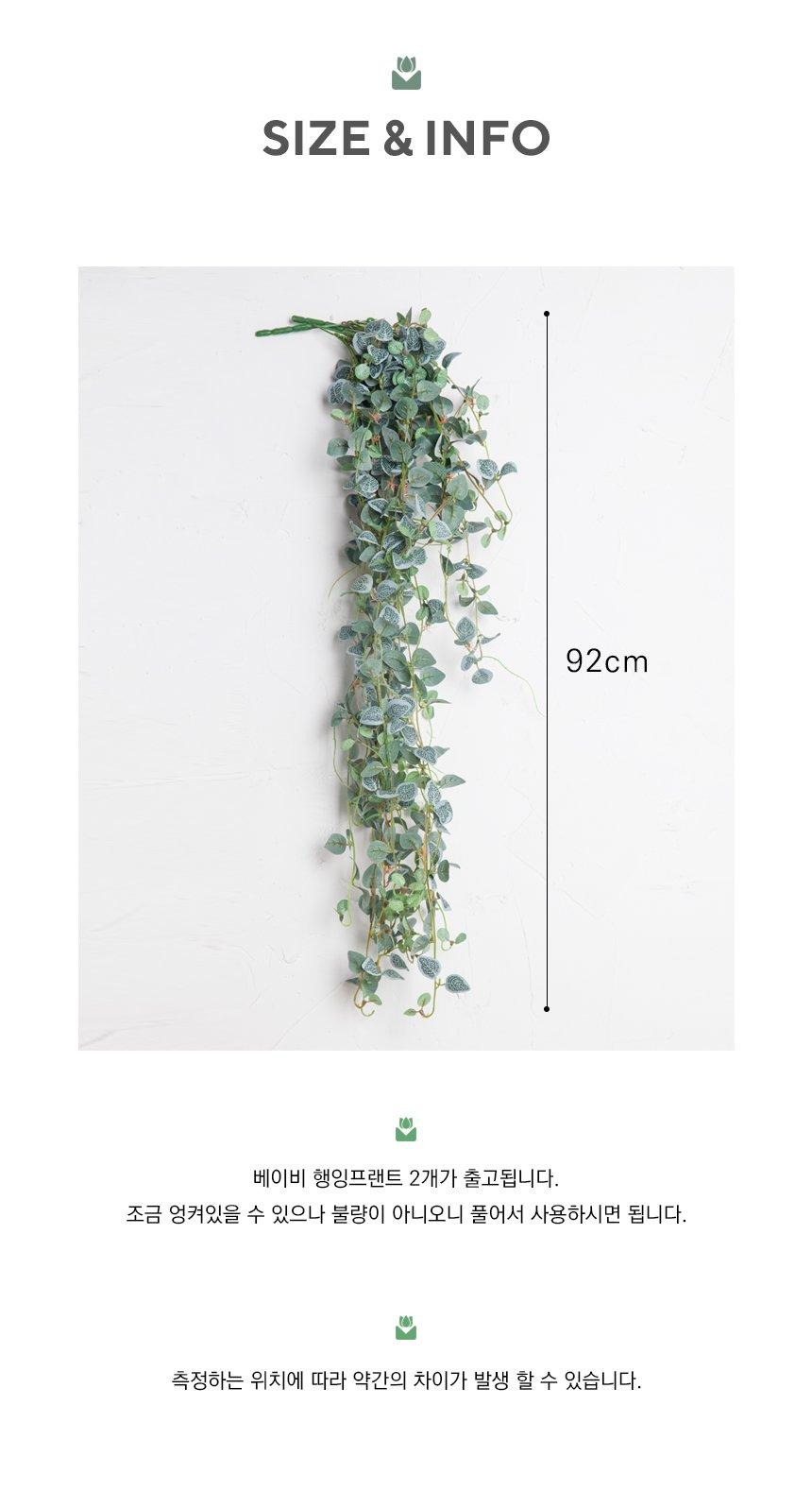 BABY-HANGING-PLANT_12.jpg