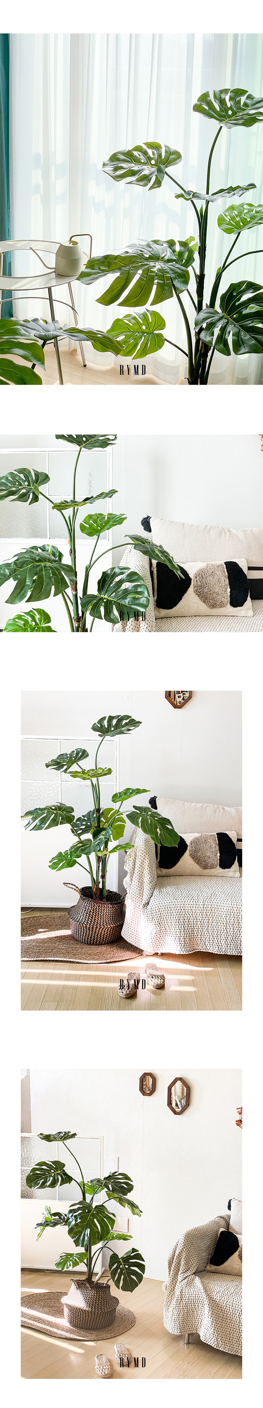 greenery-monstera-tree_05.jpg