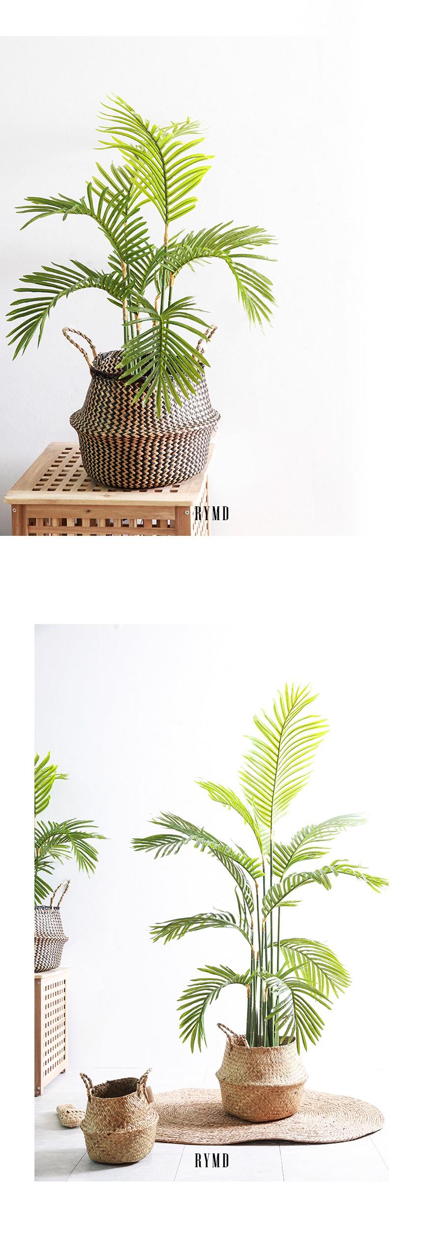 greenery-areca-tree_03.jpg