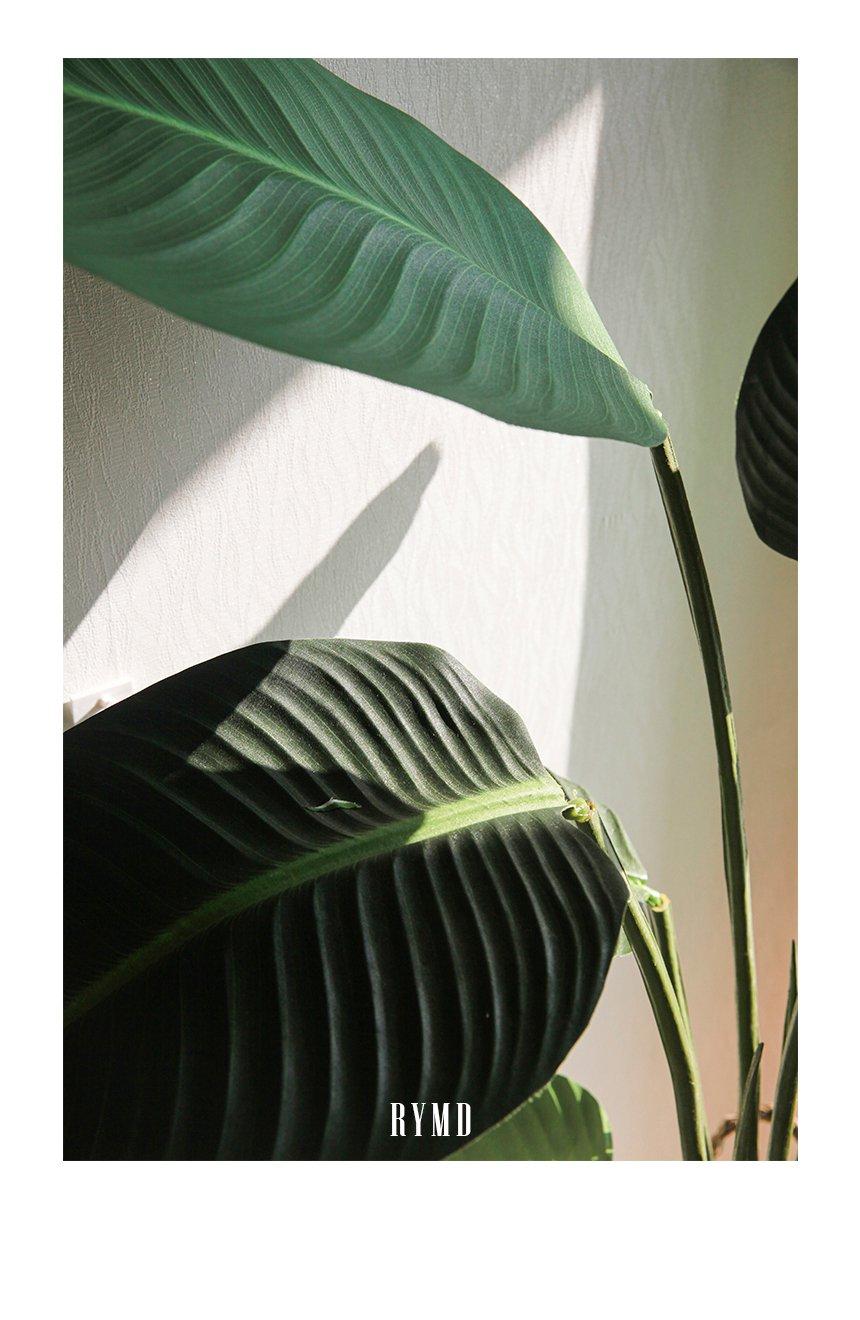 banana-tree_07.jpg