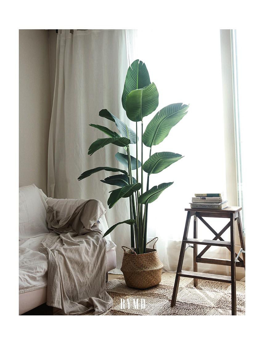 banana-tree_10.jpg