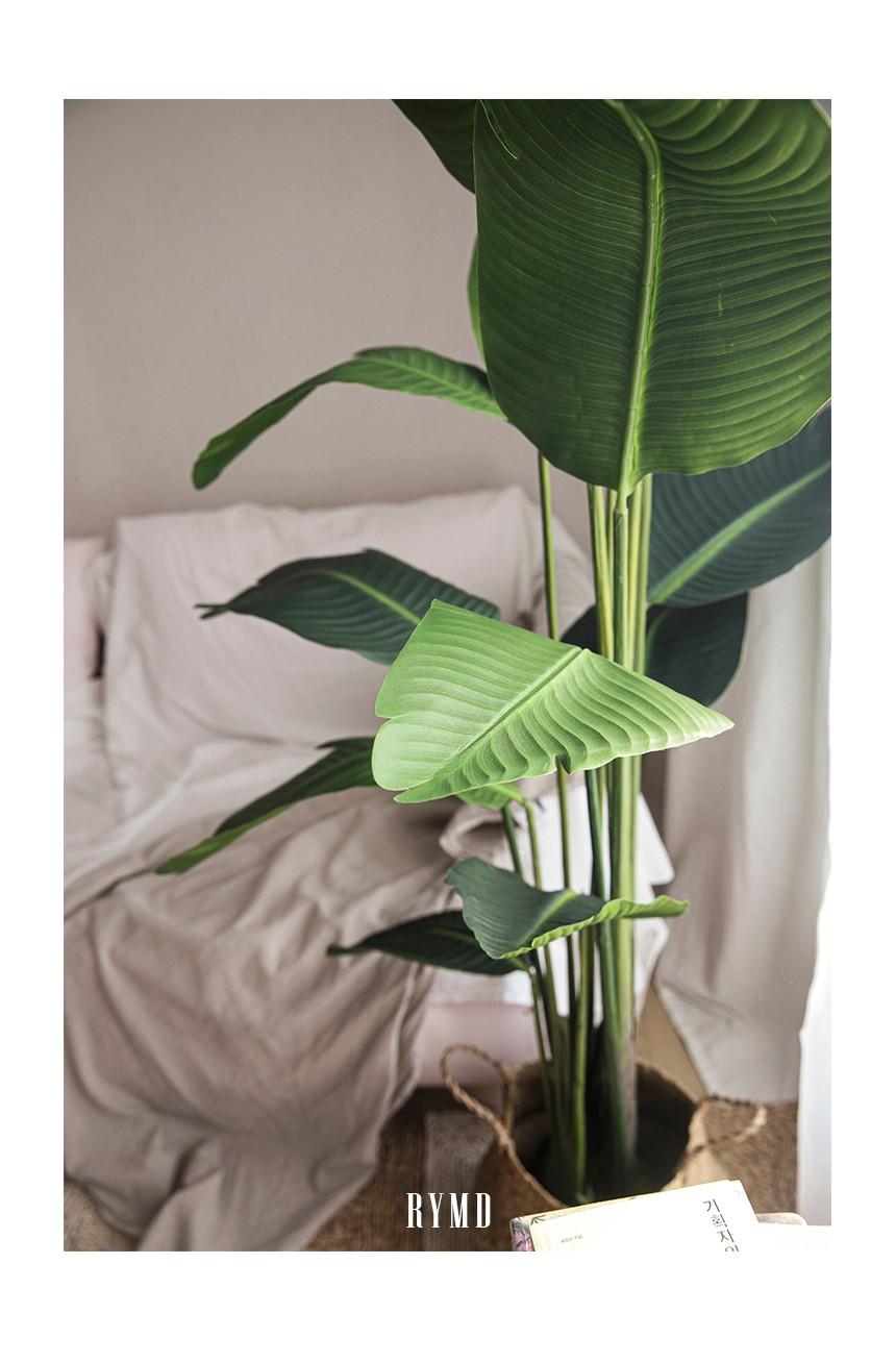 banana-tree_15.jpg