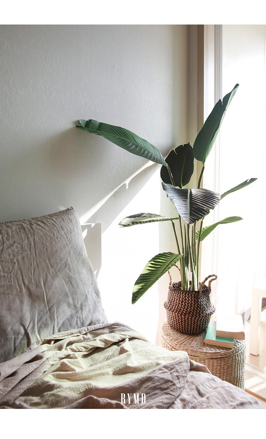 banana-tree_17.jpg