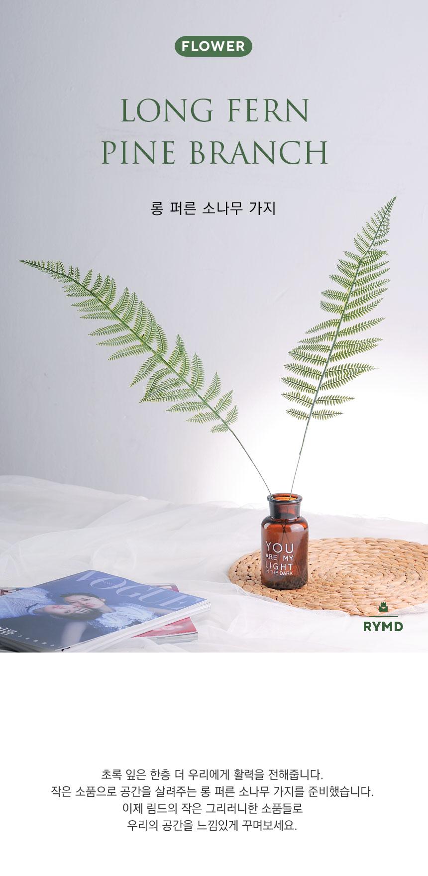 long fern1.jpg