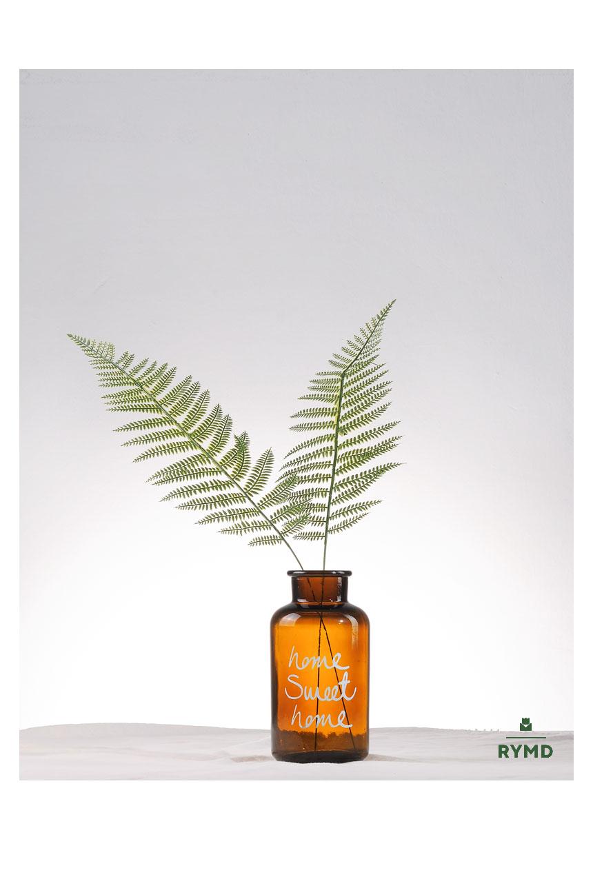 long fern2.jpg