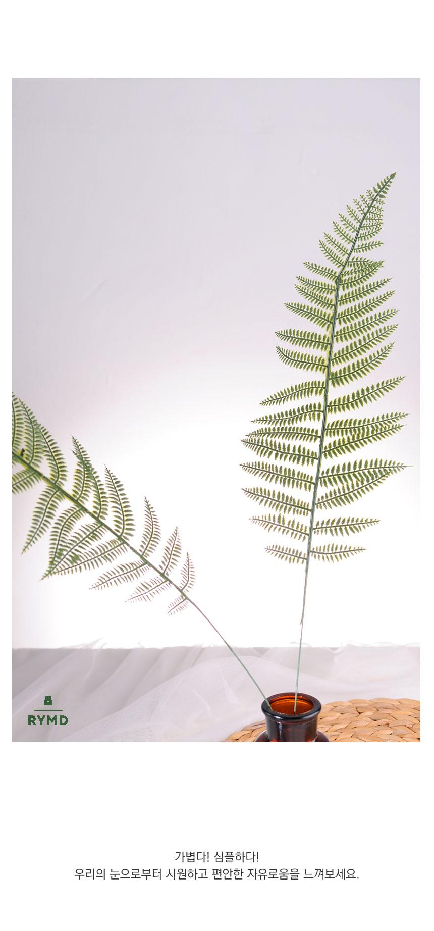long fern3.jpg