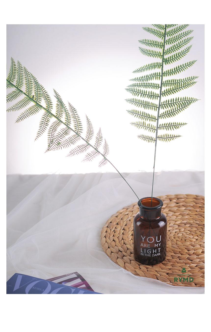 long fern4.jpg