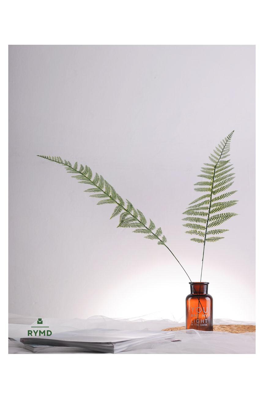 long fern5.jpg