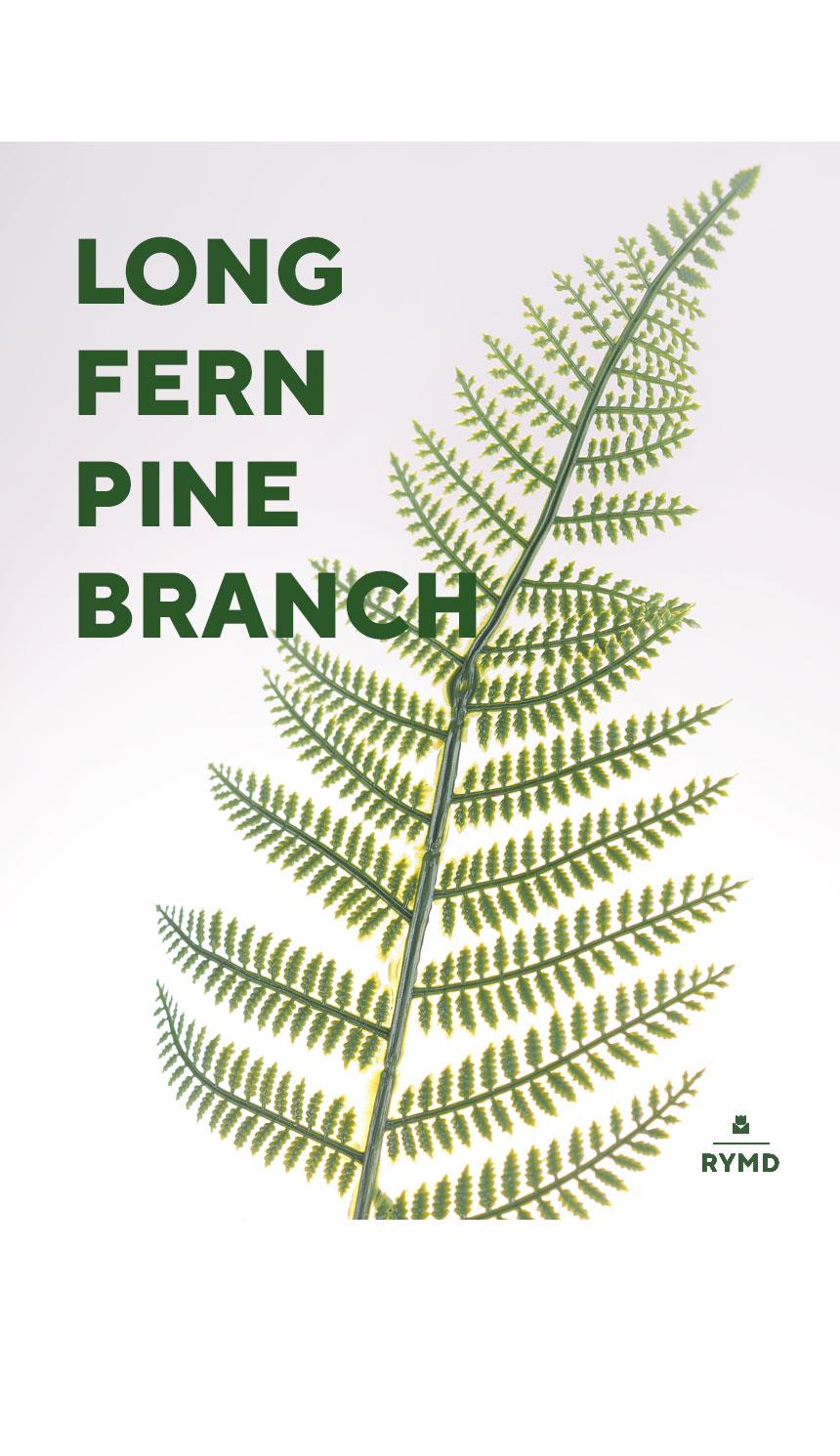long fern6.jpg